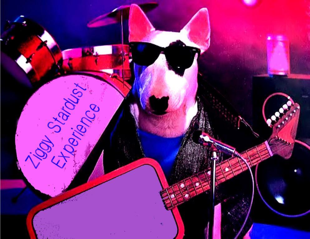 coverband feestband spuds mackenzie